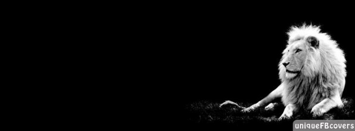 10 Thosand Cute Cat Wallpapers Black And White Facebook Covers Animales Fb Cover