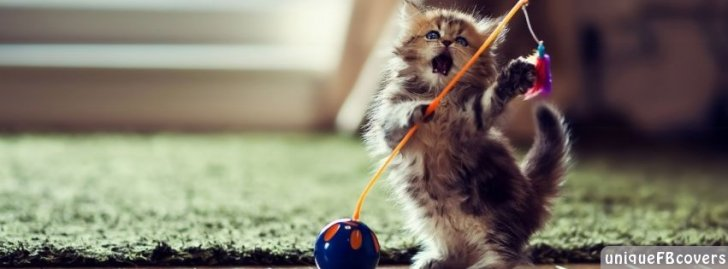 10 Thosand Cute Cat Wallpapers Dancer Cat Facebook Covers Animales Fb Cover Facebook