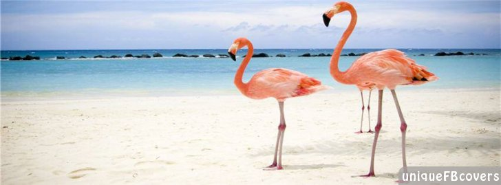 10 Thosand Cute Cat Wallpapers Flamingo Facebook Covers Animales Fb Cover Facebook