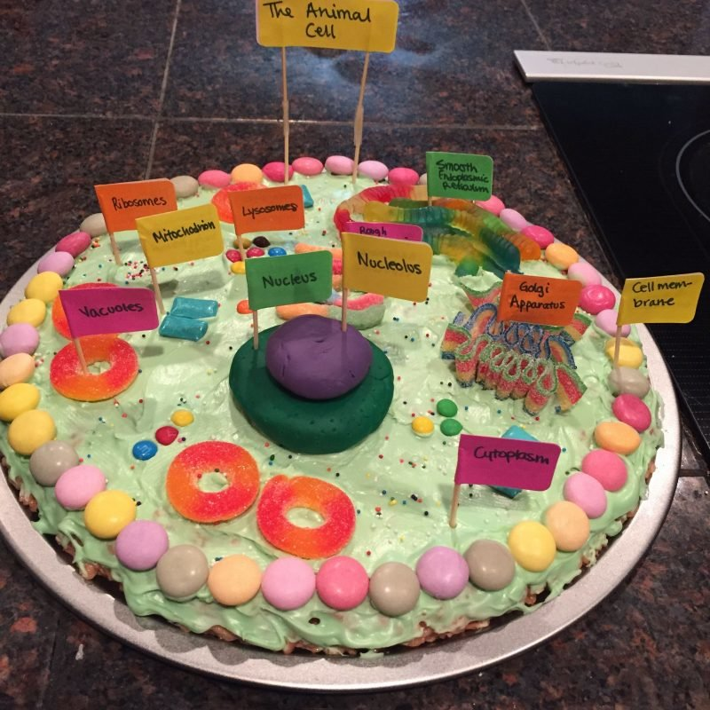 3d Animal Cell Diagram Project Wiring Diagrams