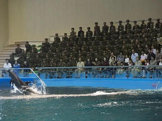 """""""Cuando visitas el delfinario de Pyongyang, puedes fotografiar a los animales, pero no a los soldados, que conformaban el 90 del púbico"""" Eric Lafforgue."""