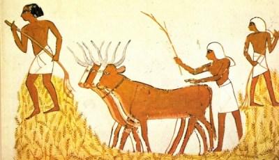 Grabado: trilla del trigo en el Antiguo Egipto.