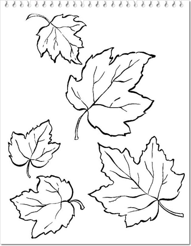 frunze de toamna planse de colorat sau decupat
