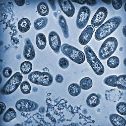 The Salmonella bacteria - taking one very big step for a germ (credit: US Dept. of Energy)