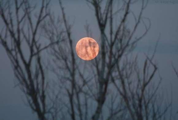 full moon nukleer