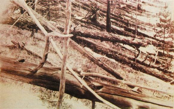 A few of the many trees felled by the 1908 Tunguska explosion, photographed in 1929 (Wikipedia Commons)