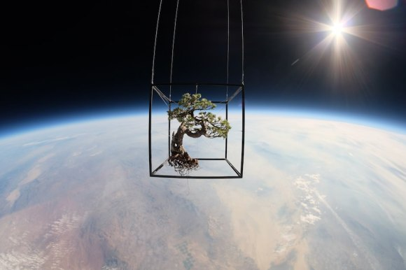 The Exobiotanica project saw a bonsai tree launched to 30,000 meters (about 98,425 feet). Credit: azumamakoto.com