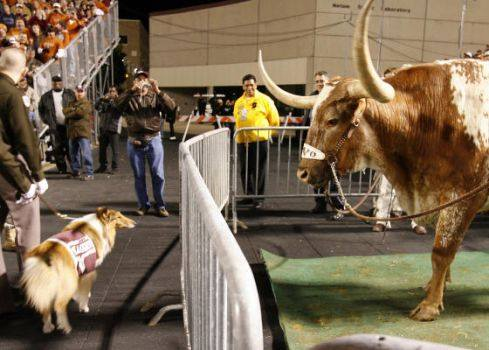 Fall Wallpaper For My Phone 11 Magnificent Photos Of Bevo Xiv