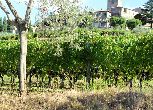 Panzano in Chianti, Italy | univeristyfoodie.com