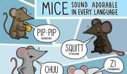 che verso fannoi topi