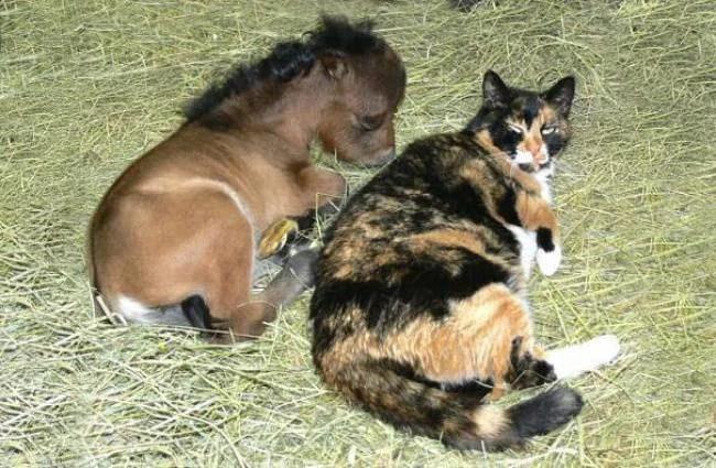 gatto e cavallo