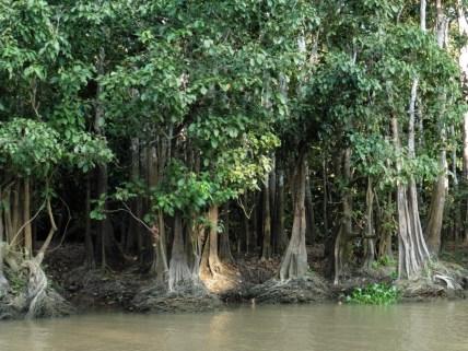 Río Kinabatanga