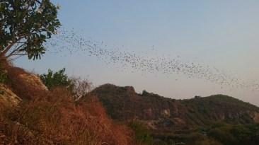Salida de los murcélagos de la Bat Cave en Battambang