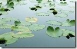 Floating Leaves - unpocogeek.com