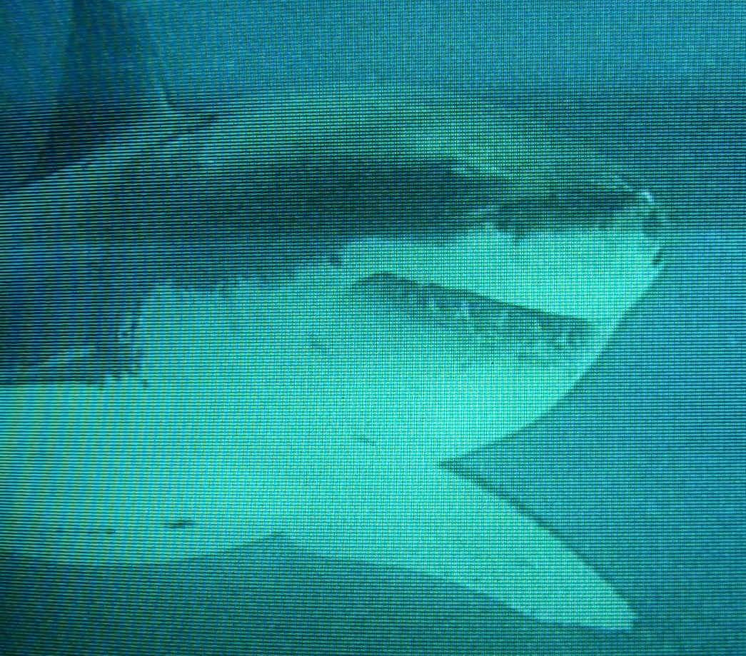 An Eine Pers Nlichkeit Jeder Hai Hat Sein EigenesGesicht
