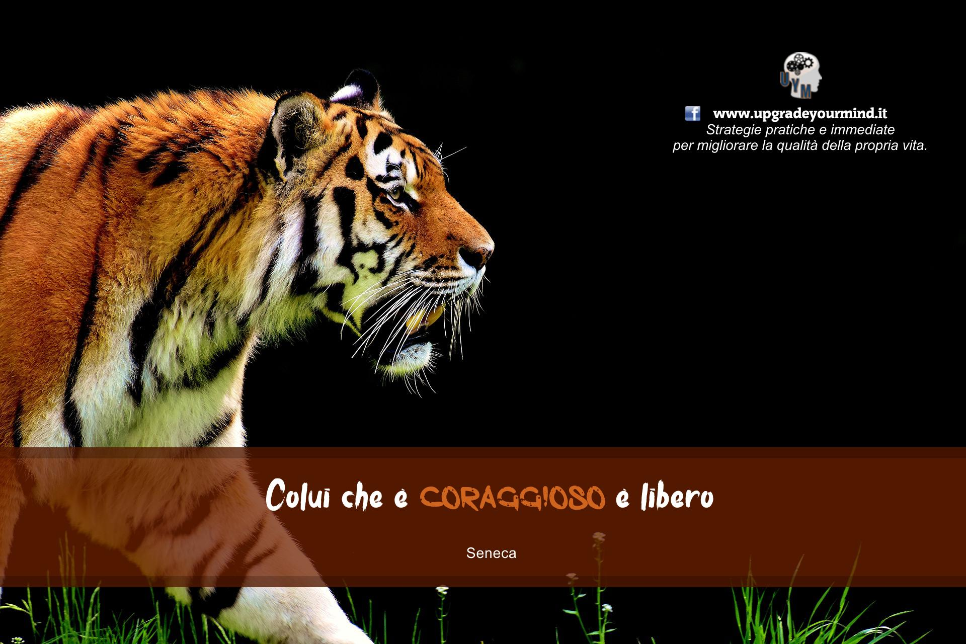 Animated Desktop Background Wallpaper Immagini Belle Con Frasi Significative Su Upgrade Your Mind
