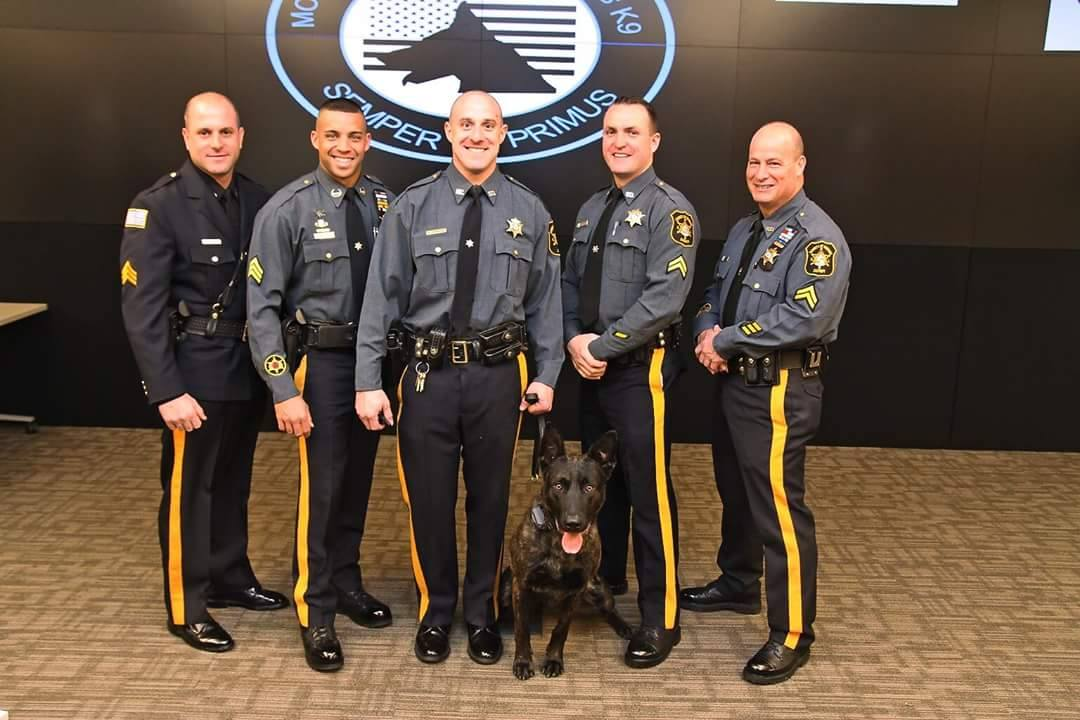 POLICE K-9\u0027s SALES - UPSTATE K-9 - Nys University Police