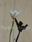 Iris(Web)