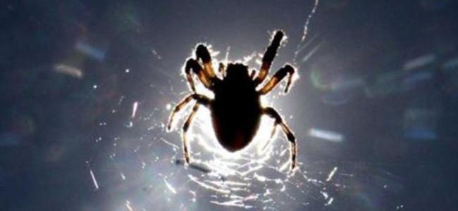 Investigan muerte de hombre por picadura de araña en Santander