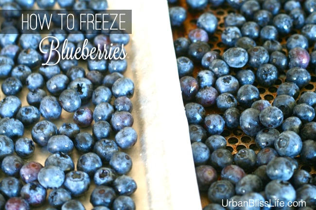 How to Freeze Blueberries 03