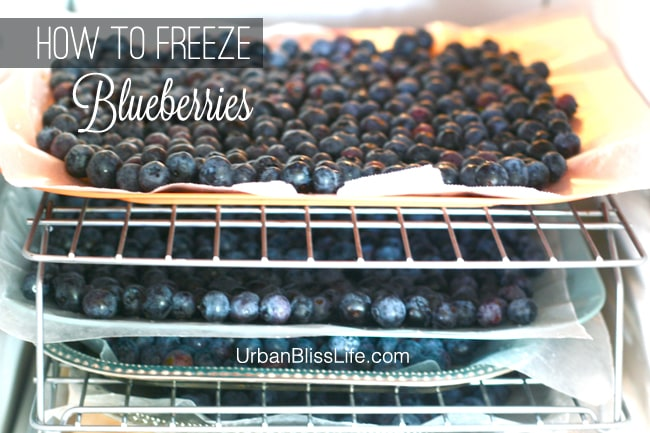 How to Freeze Blueberries 05