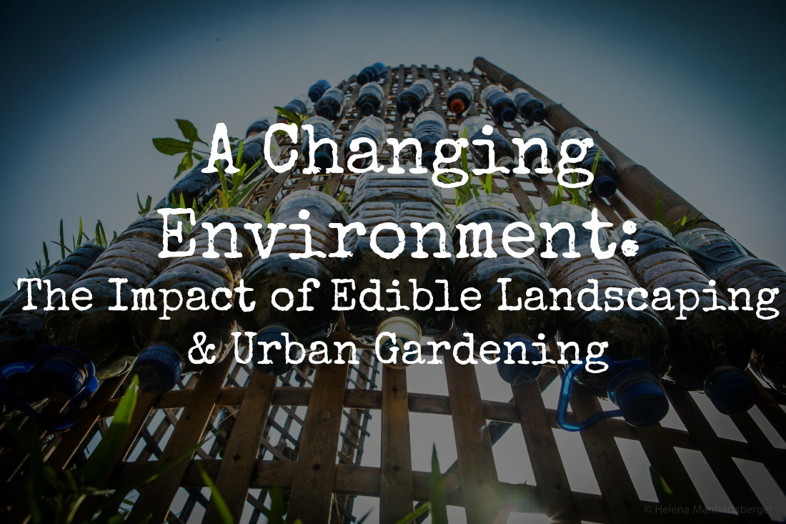 Creative environments landscape co edible gardens - Creative Environments Landscape Co Edible Gardens The Impact Of Edible Landscaping And Urban Gardening Download