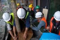 Mise en place définitive d'un arbre sur le Bosco Verticale.