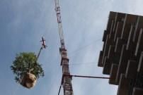 A Milan, les arbres volent !