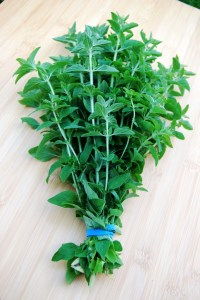 Oregano bunched and ready to hang to dry.