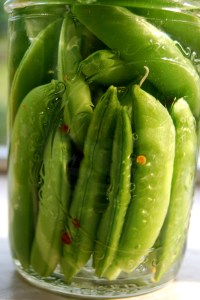 These can be put in the fridge and eaten in a week or water bath canned for later.