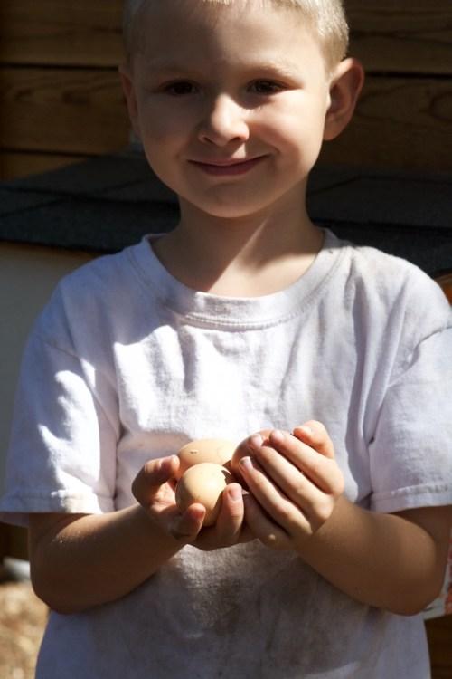 Fresh eggs!