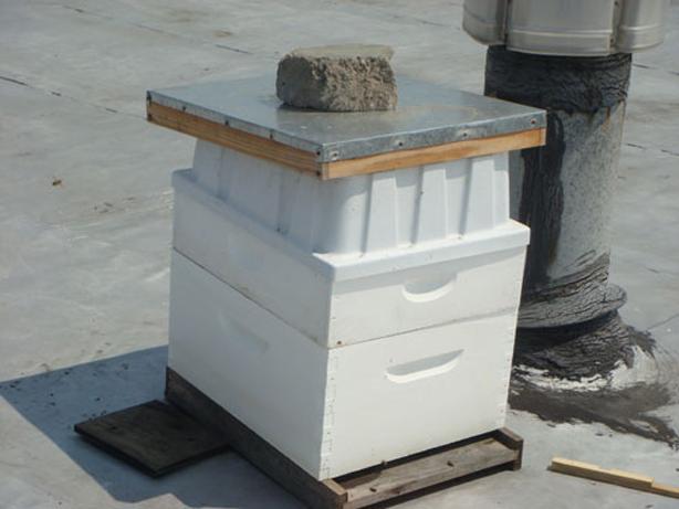 eagle_street_apiary