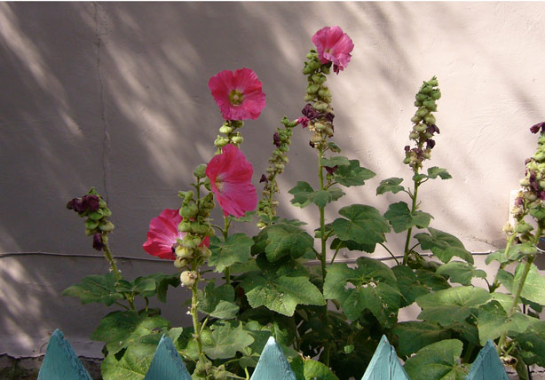 flowers_wall_taos