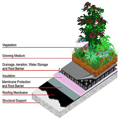 greenroof1