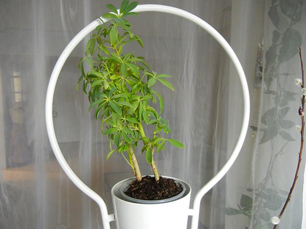 How to make inexpensive diy vertical garden room divider for The living room channel 10 vertical garden
