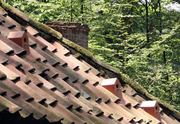 bird-house-rooftiles-on-house