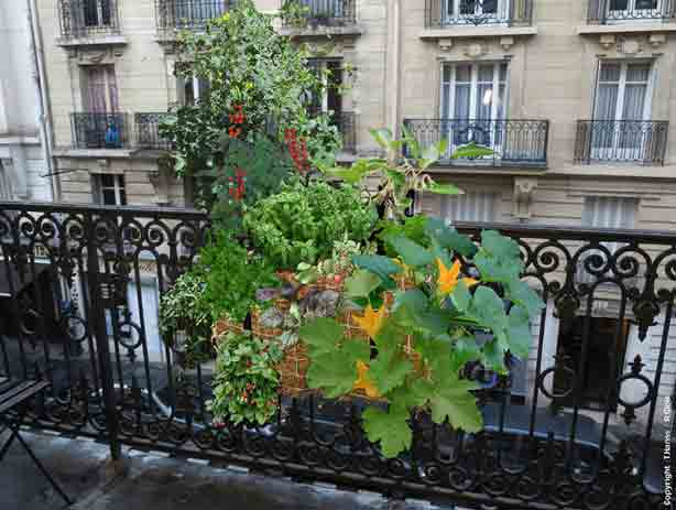 French Straw Bale Garden Grows Crops And Flowers On Urban Balcony