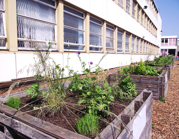 global-garden-raised-beds