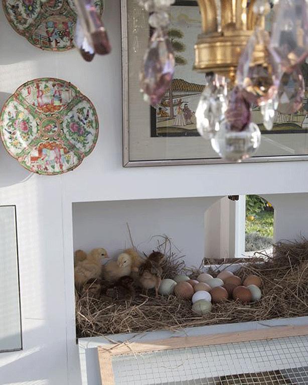 neiman-marcus-coop-eggs