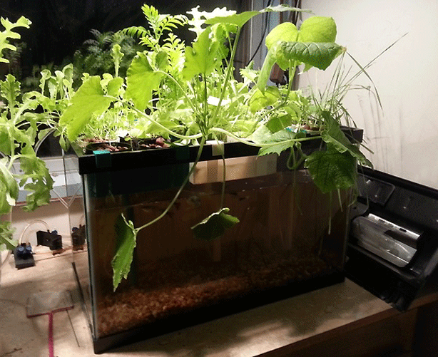 3D-printable-aquaponic-garden-system-using-fish-tank-makerbot-thinkverse