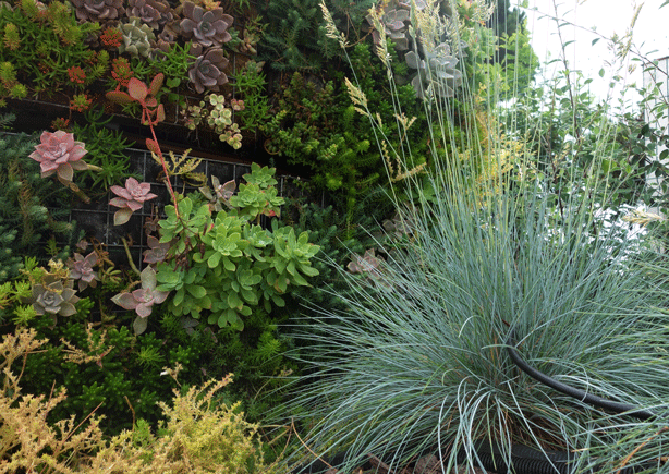 granen-vertical=succulent-garden-wall-with-grasses-urbangardensweb