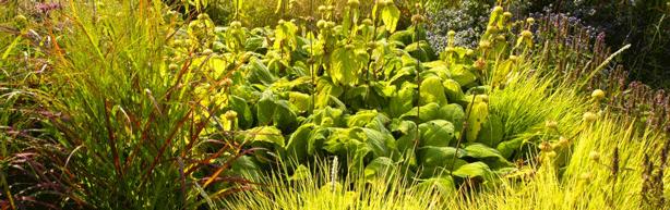 michael-king-perennial-garden-design-with-grasses