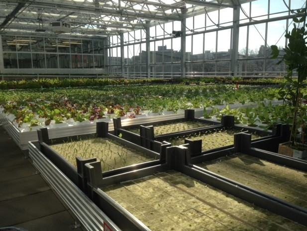 urban farm 5