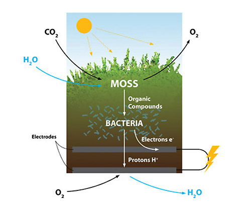 moss-table-how-it-works-blog