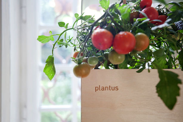plantus-wood-planter