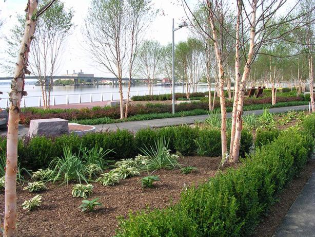 yard-park-landscape