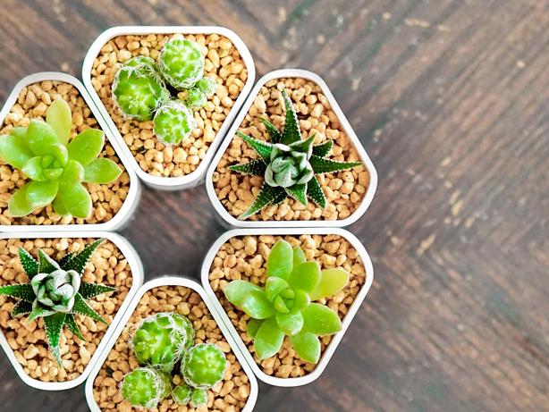 connectapot_3_succulents_urbangardensweb