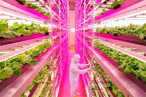 mirai-indoor-plant-factory-urbangardensweb