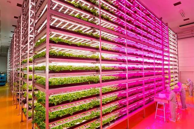 mirai-indoor-urban-plnat-factory-urbangardensweb