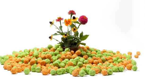 bloomin-seed-bombs-urbangardensweb